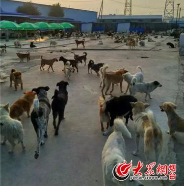烟台爱心流浪动物救助收容中心